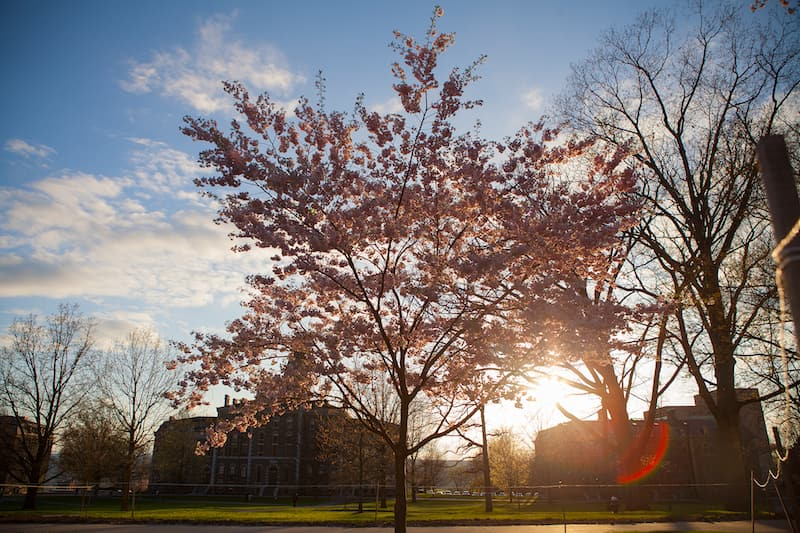 Photo of McGraw Hall in the Spring.